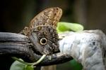Snake skin Butterfly 1